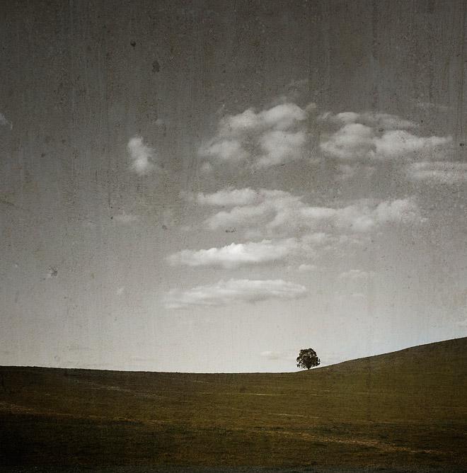 Nannup WA farmland with tree