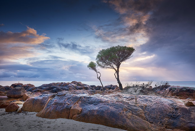 Trees grow from the rocks on the Dunsborough foreshore, Western Australia